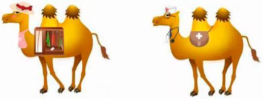 WiseSorbent® Technology Desiccant Industry Camels